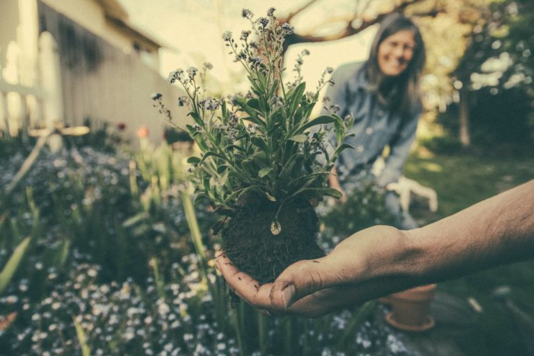 Stress Relieving Gardening Tips for Beginners