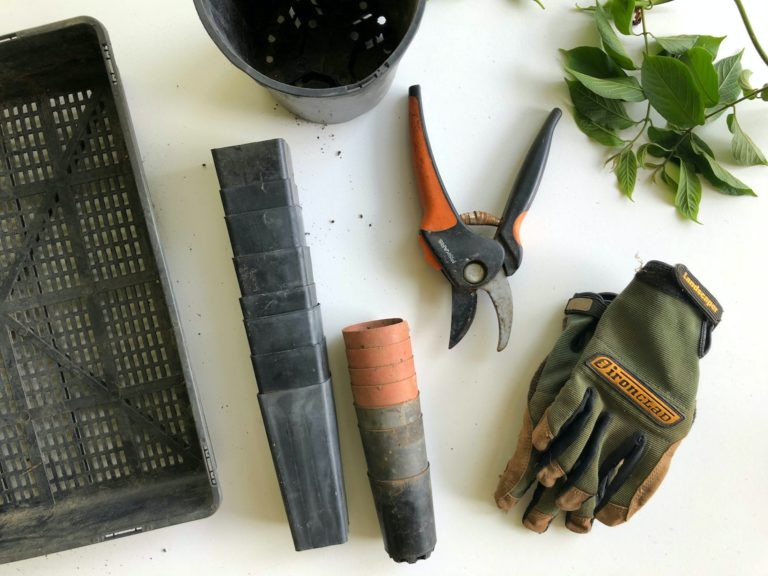 Essential Tools and Equipment for Gardening