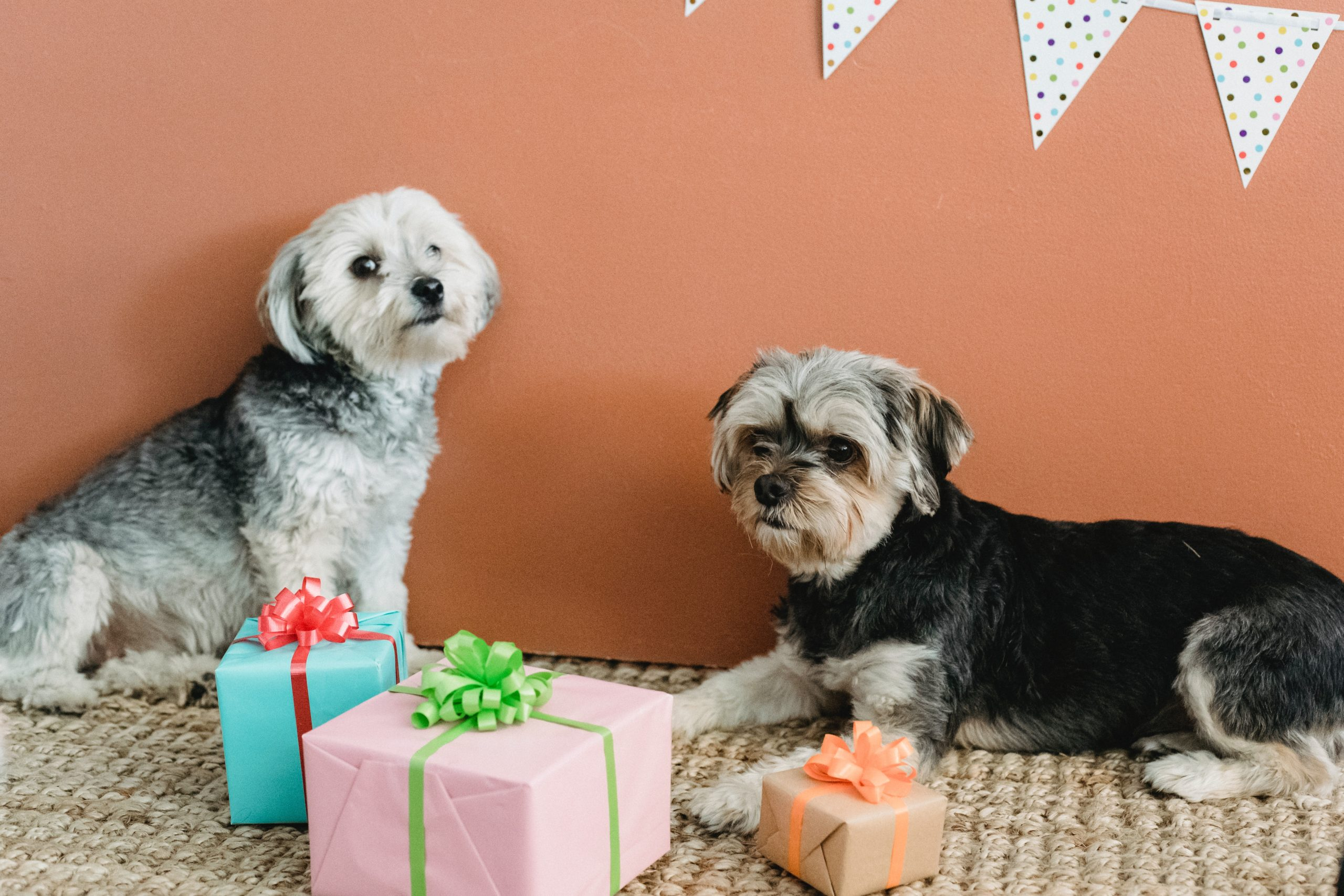 gift shopping for pets