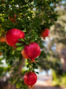 eat pomegranates to boost your immune system